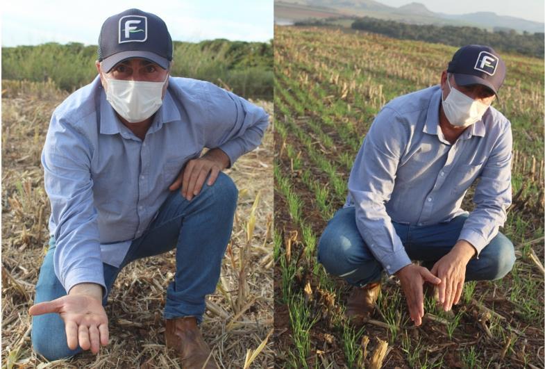 Produção de trigo é uma alternativa para cultivo no inverno