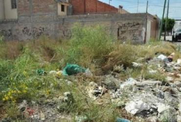 Proprietários devem estar atentos à limpeza de terrenos