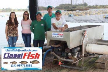 Farturense inventa a Classifish: máquina que classifica peixes